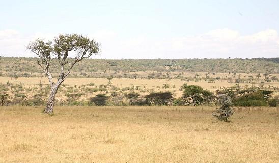 Kicheche Naboisho