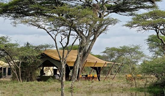 Serengeti U Canvas C