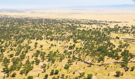 Serian Serengeti Lamai