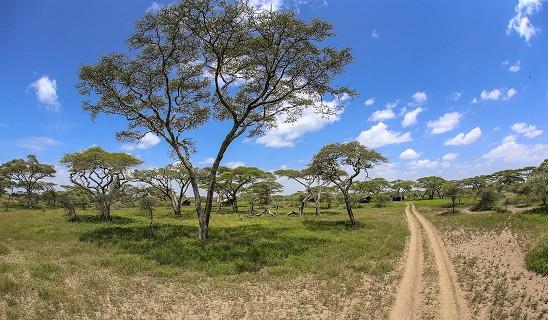 Halisi Ndutu Camp