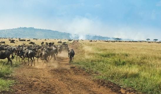 Nomad Mbalageti Camp
