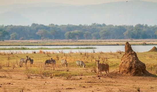 Camp Zambezi