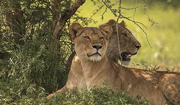 honeymoon safaris
